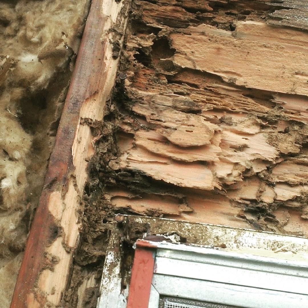 Spring Tim Termites Pest Damage