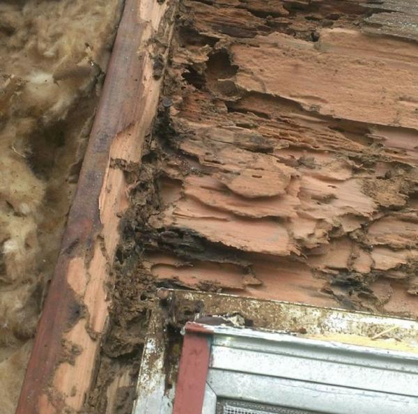 Image of Termite damage to residential home