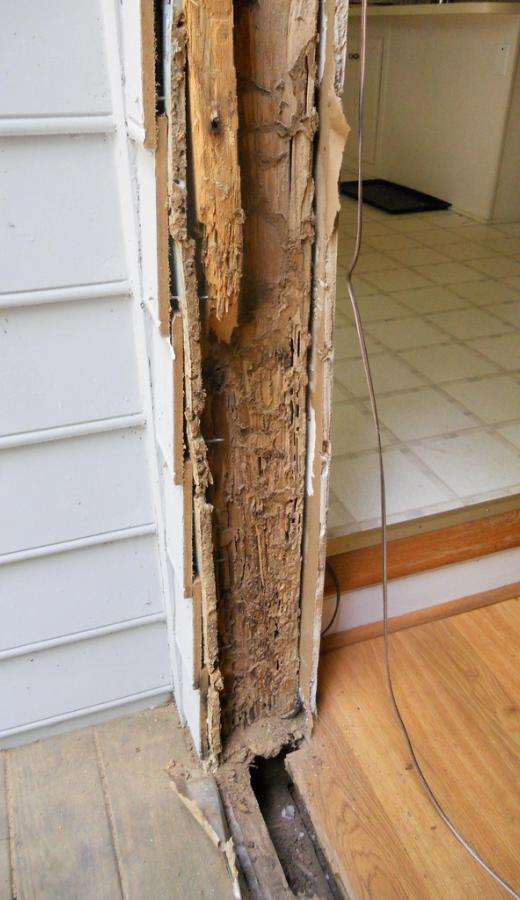 Example of Termite Damage to Home Wall