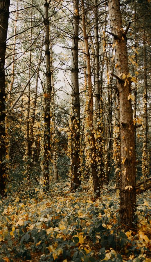 Image of Tick habitat - Humboldt Termite & Pest