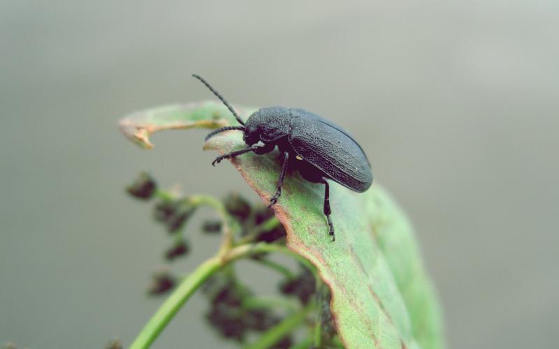 Image of a Beetle - Humboldt Termite & Pest Control