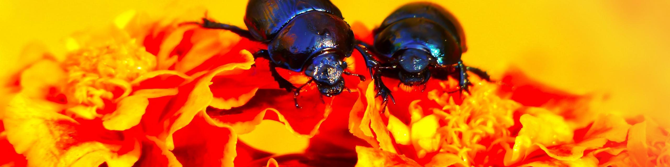 Humboldt Termite & Pest Control Services