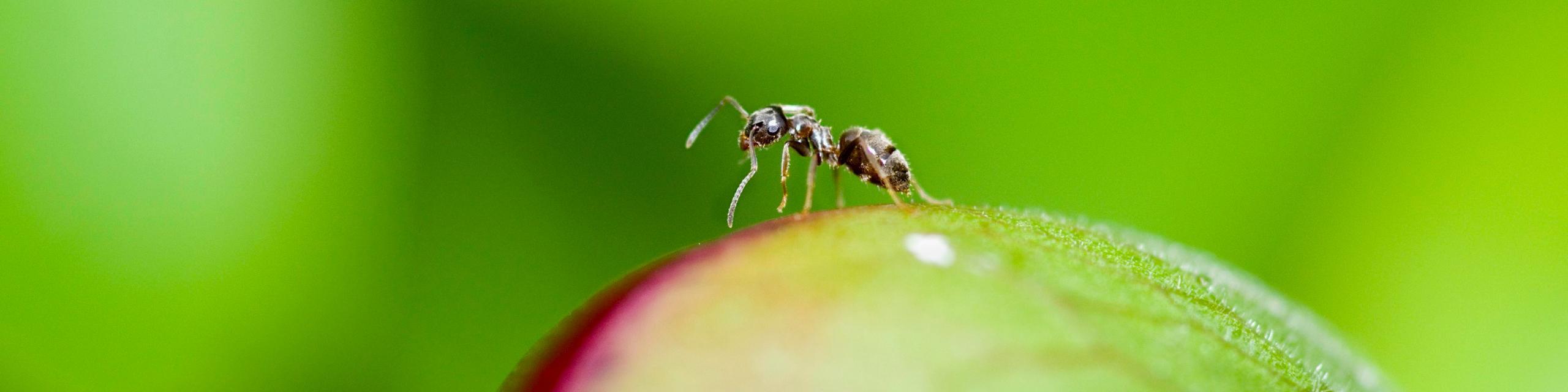 Humboldt Termite and Pest Control - Proactive Preventative Pest Protection